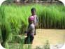 TRABALHO INFANTIL - OIT defende pol�ticas p�blicas coerentes para acabar com trabalho infantil